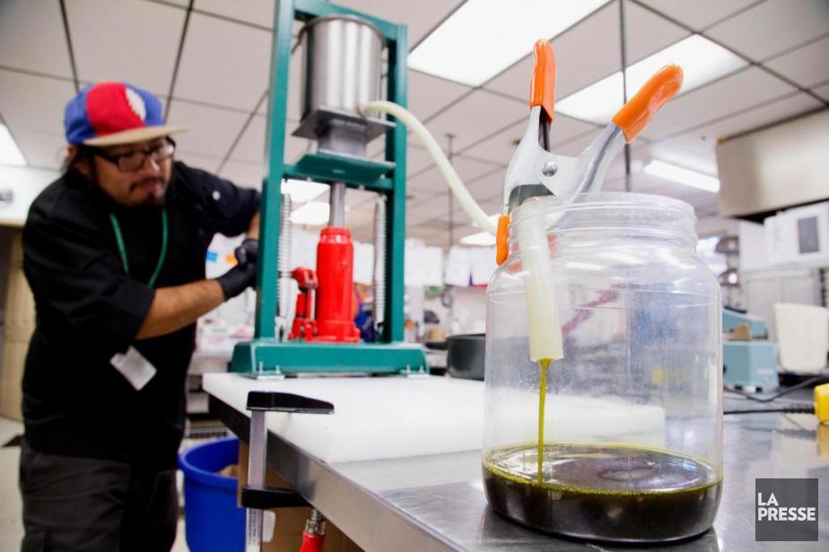 Plusieurs usines canadiennes produisent déjà de l'huile de... (PHOTO ALAIN ROBERGE, ARCHIVES LA PRESSE)