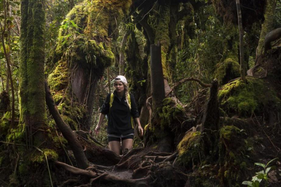 Chaque pas dans la forêt vieille de 200000... (Photo Joëlle Choquette et Iouri Philippe Paillé, collaboration spéciale)