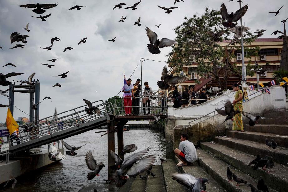 Des migrants nourrissent et regardent des pigeons au temple Wat... | 2017-04-17 00:00:00.000