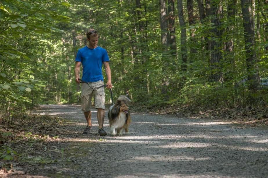 Toutou pourra continuer de vous suivre en randonnéedans... (PhotoSébastien Larose, fournie par le parc national d'Oka, SEPAQ)