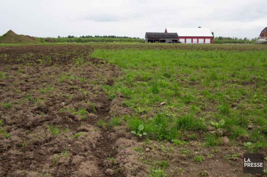 La Fiducie foncière agricole viserait l'achat de 30... (Photo Martin Tremblay, Archives La Presse)