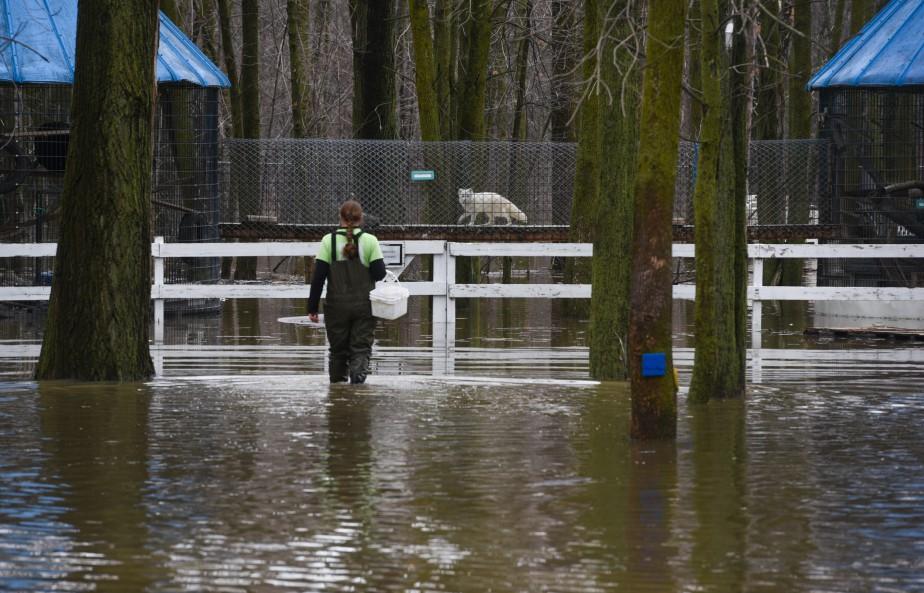 L'équipe de Zoo Académie de Nicolet a dû déplacer une trentaine d'animaux, mardi, en raison de l'inondation de certaines de ses installations. (François Gervais, Le Nouvelliste)
