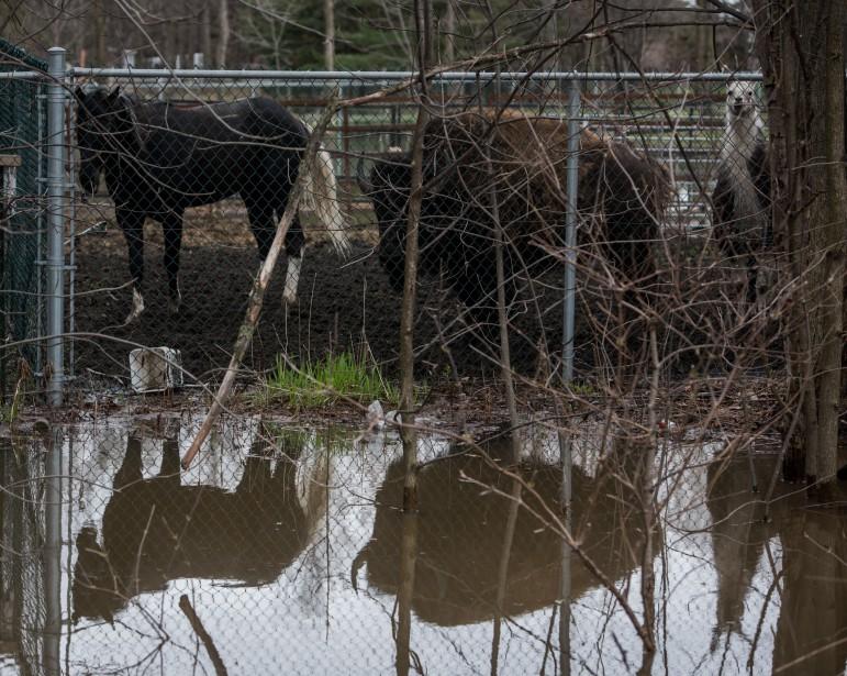 Les animaux sont en sécurité malgré l'inondation qui frappe le Zoo académie de Nicolet. (François Gervais, Le Nouvelliste)