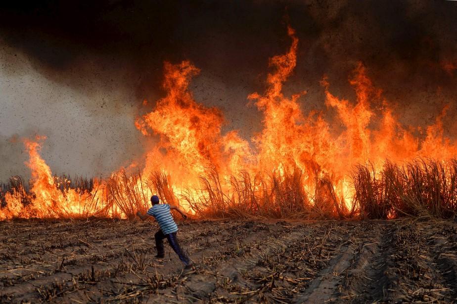 Des travailleurs mexicains mettent le feu à une plantation de... | 2017-05-15 00:00:00.000