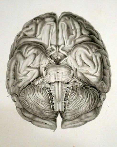 Dessin du cerveau humain (XVIIIe siècle). (Le Soleil, Erick Labbé)
