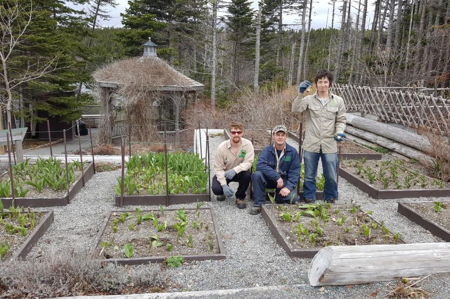 Un horticulteur a raconté que des bénévoles avaient... (PHOTO PC)