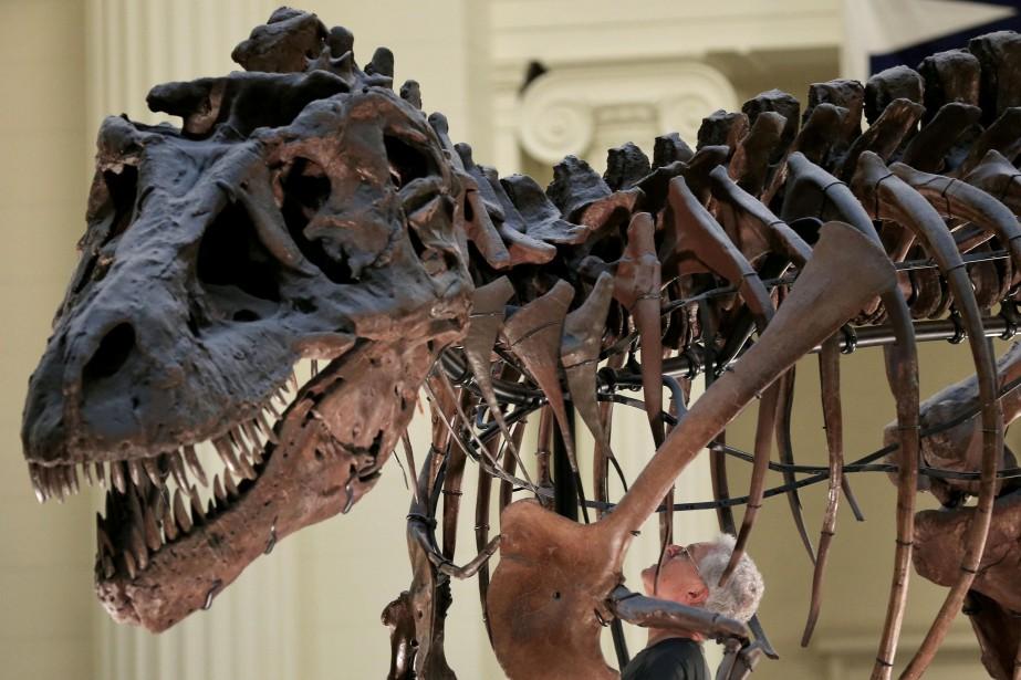 Les grands tyrannosauridés sur lesquels des plumes ont... (ARCHIVES REUTERS)