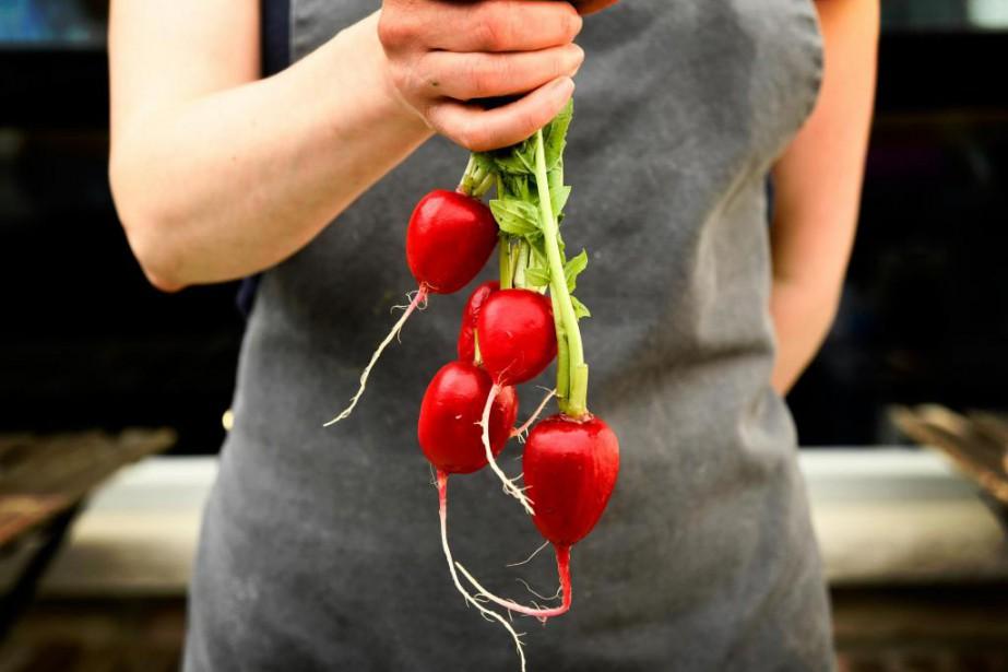 Le radis a longtemps été un légume qui... (Photo Bernard Brault, La Presse)
