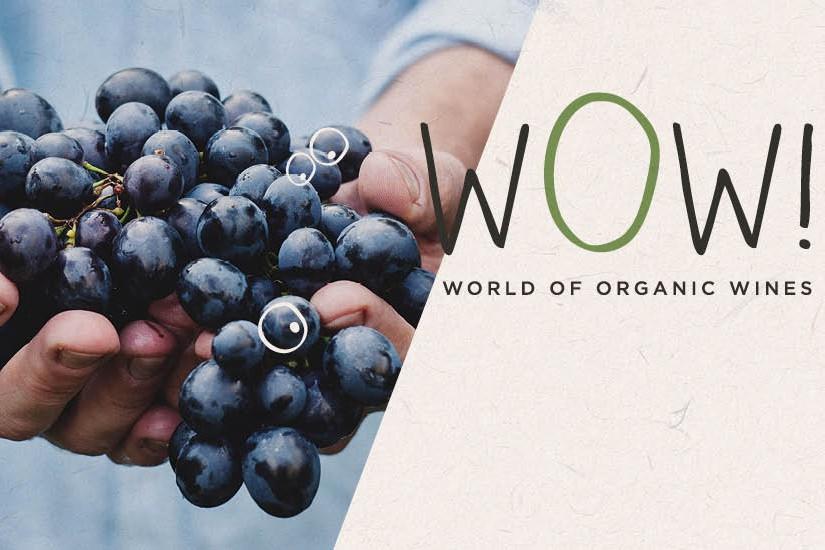 Preuve de leur montée en puissance et en goût, les vins bio... (CAPTURE D'ÉCRAN)