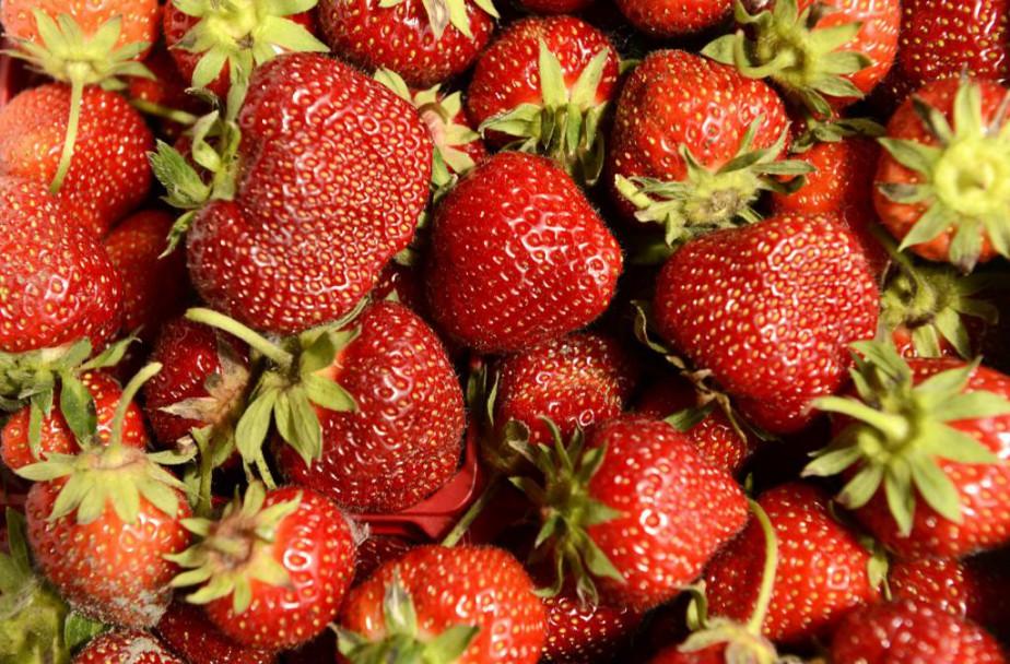 La saison des fraises est le moment idéal... (Photo Edouard Plante-Fréchette, La Presse)