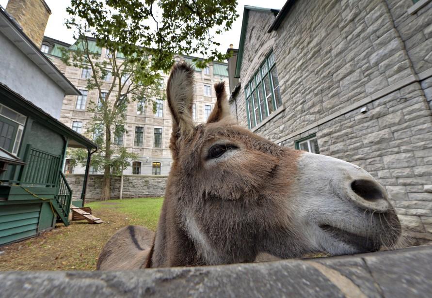 L'âne Aldo et sa compagne, la chèvre Holy, habitaient depuis... | 2017-07-02 00:00:00.000