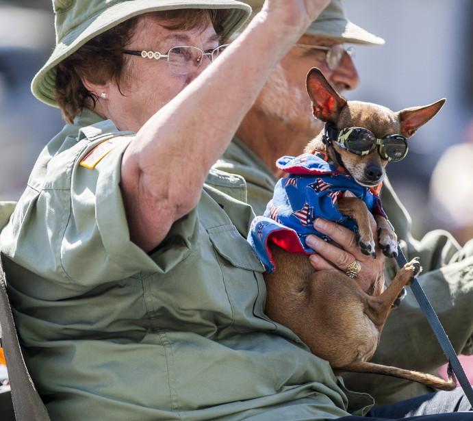 Un chien plutôt patriotique à Summerlin au Nevada | 4 juillet 2017