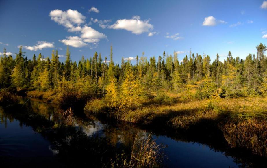 Les propriétaires de forêt privée-il y en a... (Photo Bernard Brault, Archives La Presse)
