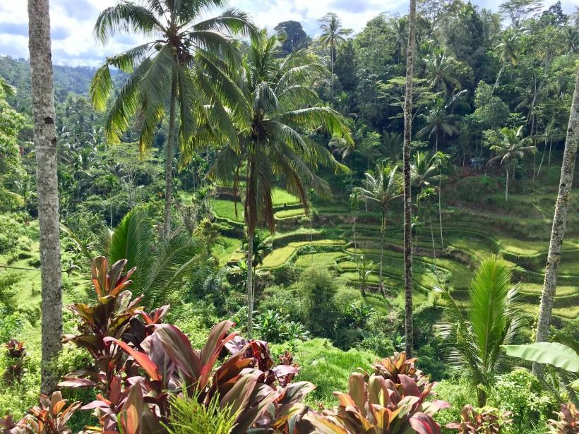 Des rizières, près de Ubud (collaboration spéciale Nadielle Kutlu)