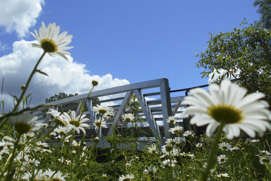 Depuis 2013, le pont Robert-Boutin permet de traverser la rivière Coaticook en plus de faciliter l'accès au réseau cyclable pour les motoneigistes, les cyclistes et les piétons. Et lorsque le soleil se pointe le bout du nez, le passage sur le pont est agrémenté de jolies marguerites bordant son chemin.  Stéphanie Girard, La Tribune  | 4 août 2017