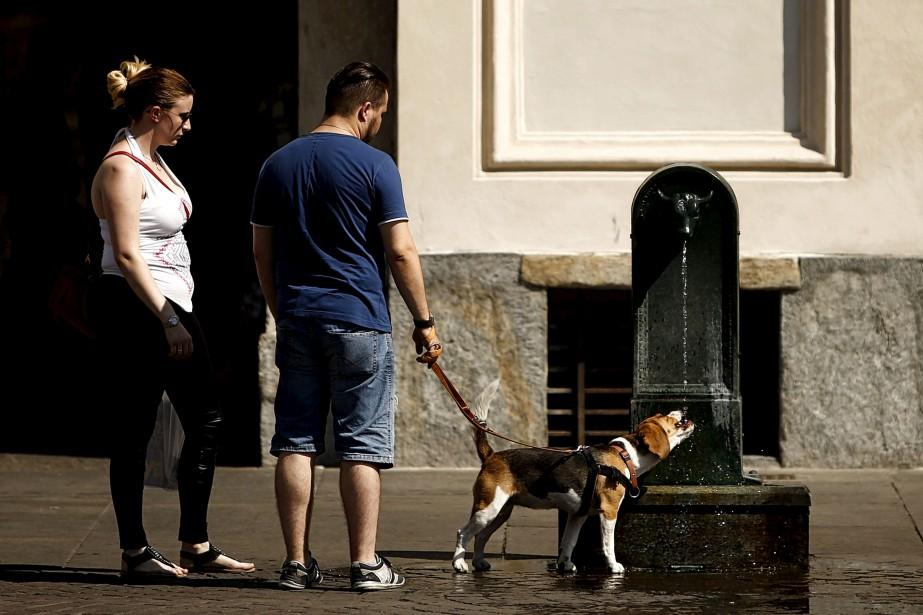 Un petit rafraîchissement pour Pitou avant de poursuivre la balade en ce très chaud samedi à Turin. | 5 août 2017