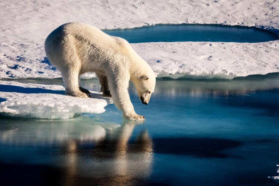Dans l'Arctique, zone la plus sensible au réchauffement,... (ARCHIVES AFP)