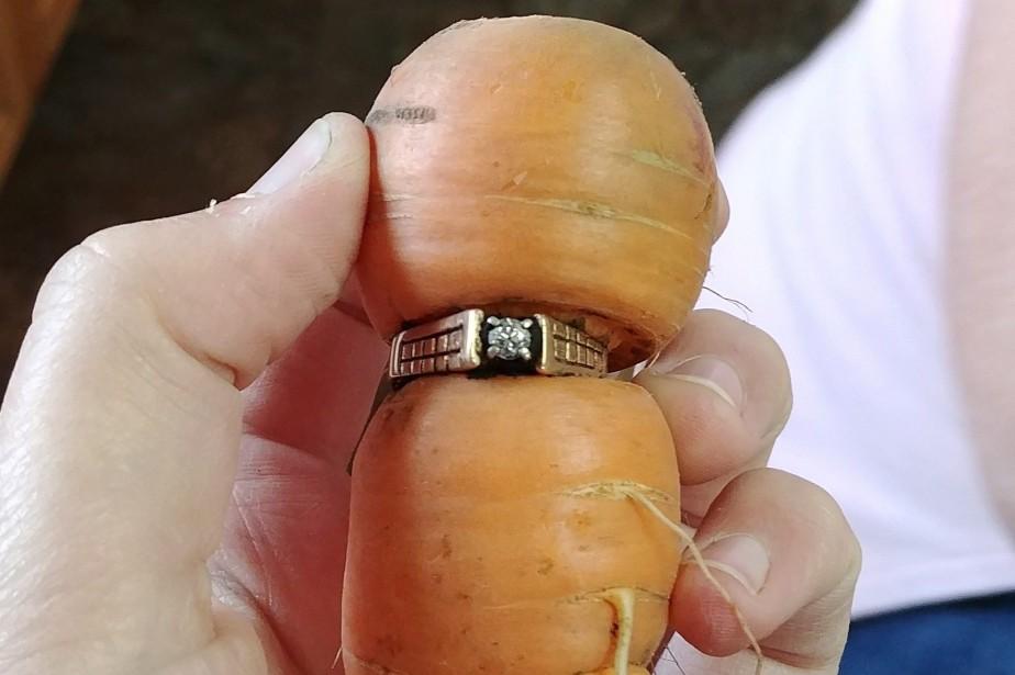 La carotte a poussé dans l'ouverture de la... (Photo PC)