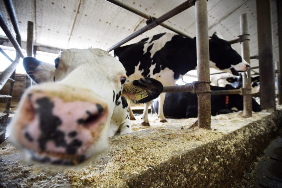 L'industrie laitière... (PHOTO Sean Kilpatrick, ARCHIVES LA PRESSE CANADIENNE)