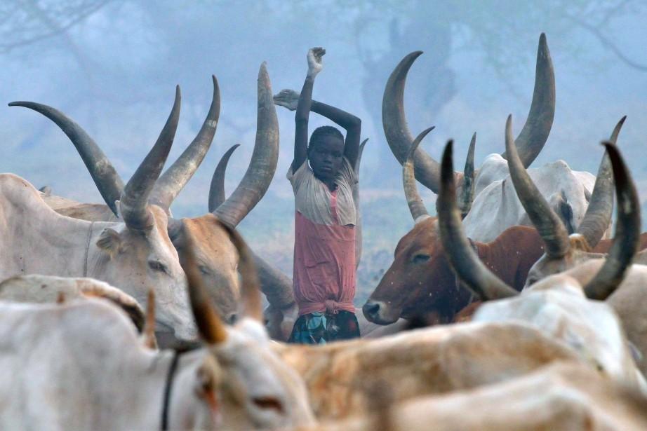 Au Soudan du Sud, les vaches sont l'un... (ARCHIVES AFP)