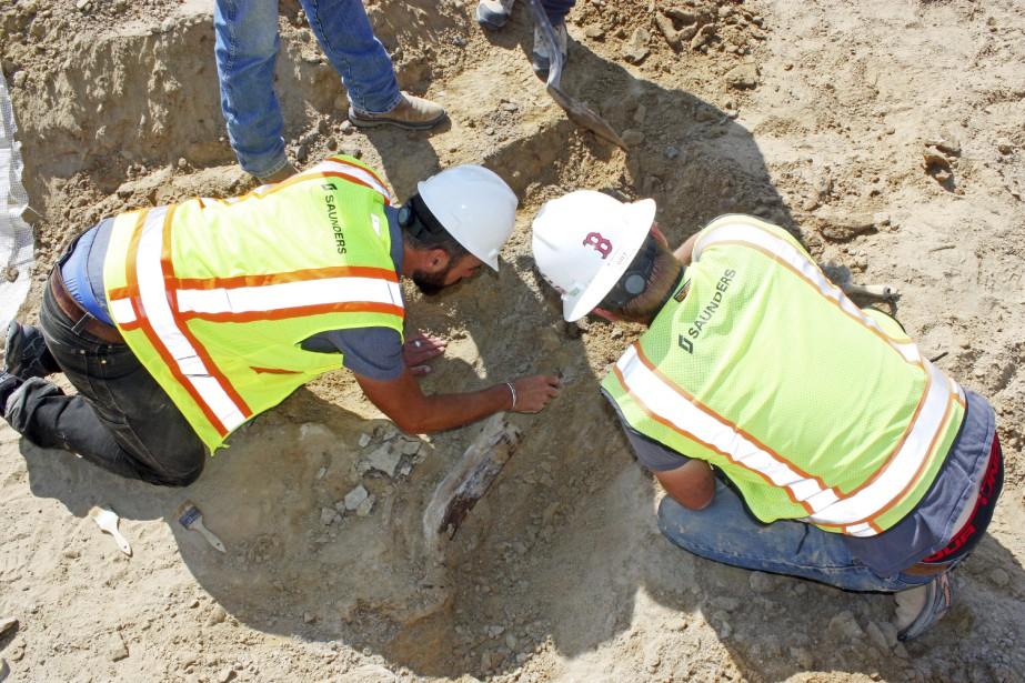 Jusqu'à présent, les paléontologues n'ont mis au jour... (PHOTO AP)