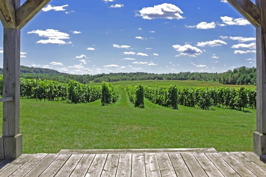 À Ulverton, au coeur des vallons de la région du Val-St-François, le vignoble Les Vallons de Wadleigh propose un décor bucolique. On peut apprécier les magnifiques paysages lors d'une marche à travers les champs de vignes, puis on peut en profiter pour déguster quelques-uns de leurs meilleurs vins.  Stéphanie Girard, La Tribune  | 1 septembre 2017