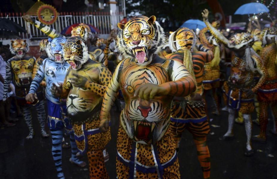Des Indiens peinturés en tigres prennent part à la danse du tigre («Pulikali»), à Thrissur, en Inde, lors du festival de Onam. | 8 septembre 2017