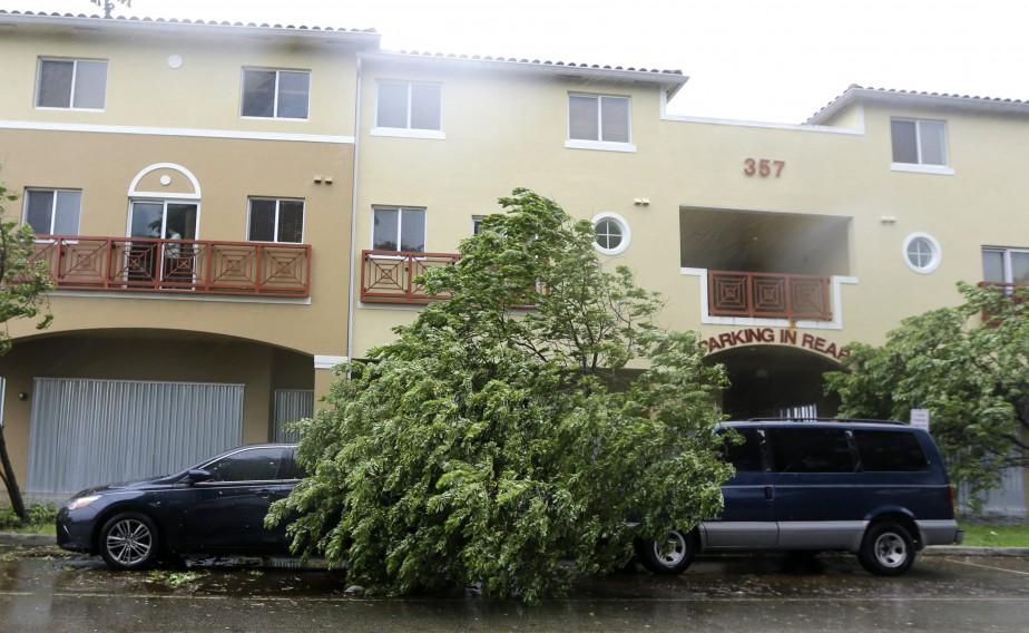 Un arbre s'est affaissé sur une voiture à Miami Springs. (AP)