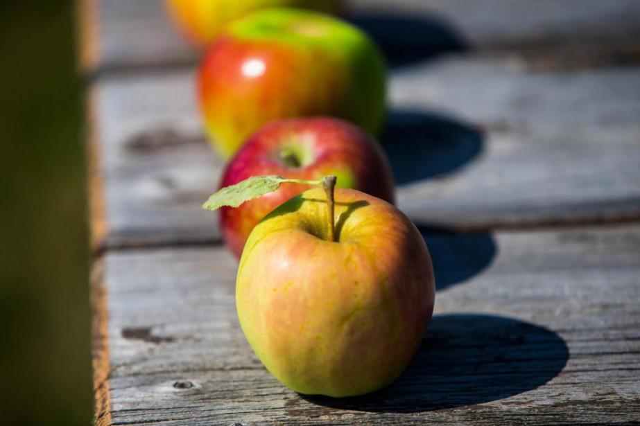 La pomme est fragile aux meurtrissures, il faut... (Photo Olivier Jean, La Presse)
