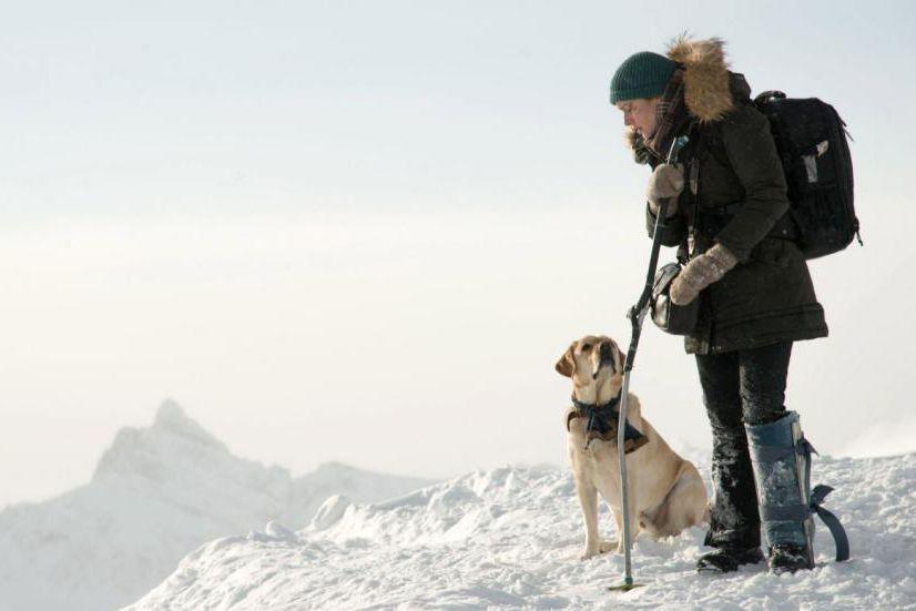 The Mountain Between Us... (image fournie par 20th Century Fox)