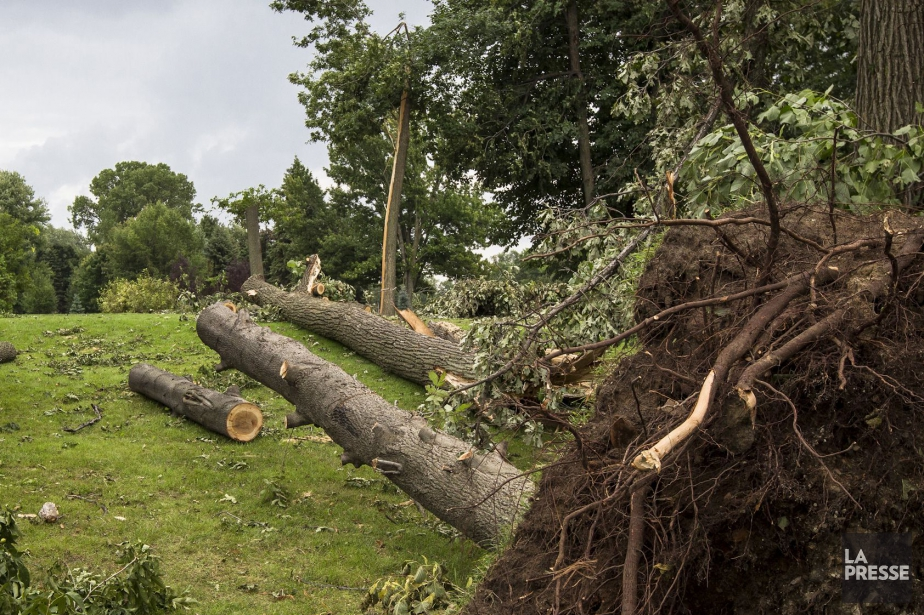 Des arbres bloquent des routes dans certains secteurs... (PHOTO ARCHIVES LA PRESSE)