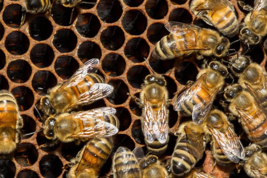 Naturoney, connue aussi comme Les ruchers Promiel, a... (PHOTO OLIVIER PONTBRIAND, ARCHIVES LA PRESSE)