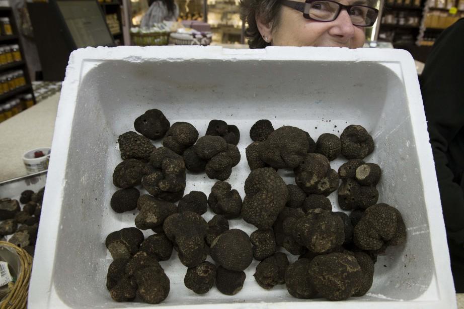 Des truffe noireTuber melanosporum.... (Photo Philippe Wojazer, archives REUTERS)