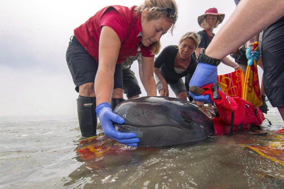 Avec la disparition de Chester (photo), l'aquarium n'a... (Photo archives La Presse Canadienne)