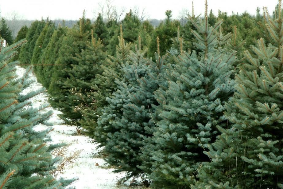 Selon Statistique Canada, le nombre d'hectares dédiés aux... (Photo thinkstock)