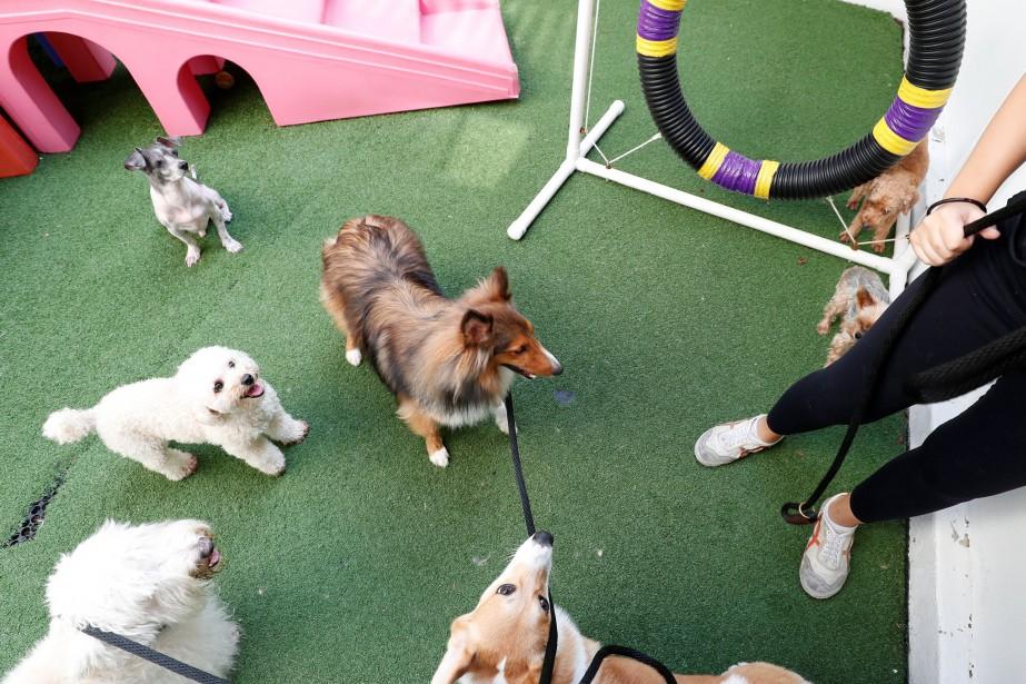 «Le spectacle du Cirque de chiens pour le... (photo Edgar Su, REUTERS)