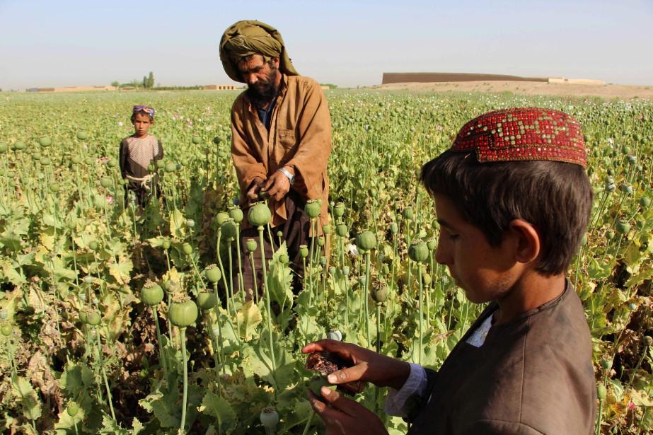La production d'opium a doublé dans le pays... (PHOTO AFP)