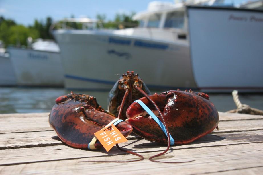 Les exportations canadiennes de homard vers l'Union européenne... (Photo archives La Presse canadienne)