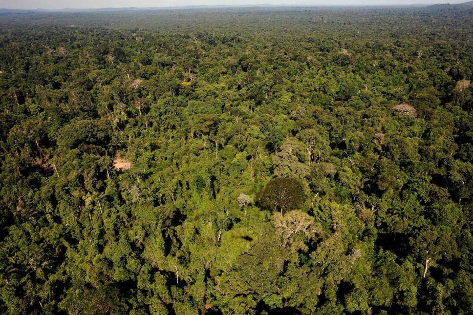La forêt amazonienne, «poumon» de la Terre, est... (ARCHIVES AFP)
