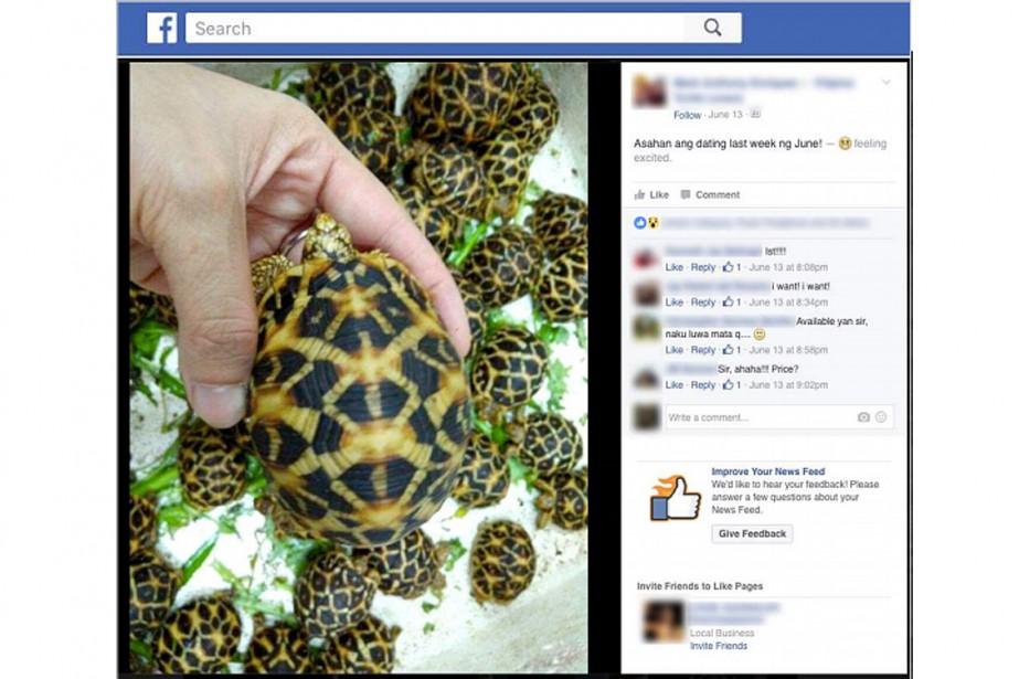 Une capture d'écran d'une publicité publiée sur Facebook... (IMAGE FOURNIE PAR TRAFFIC.ORG)