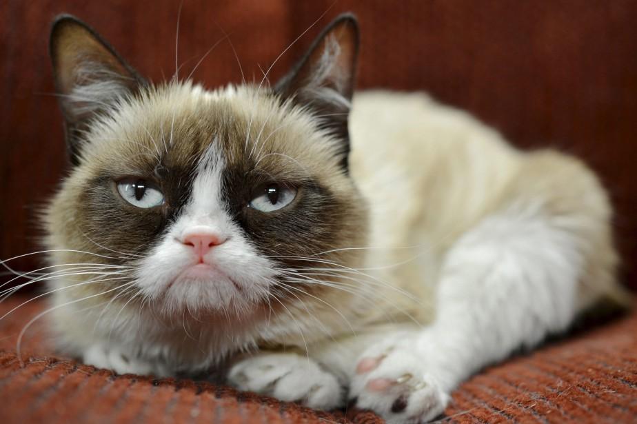 Grumpy Cat est l'une des icônesde l'internet les... (ARCHIVES AP)