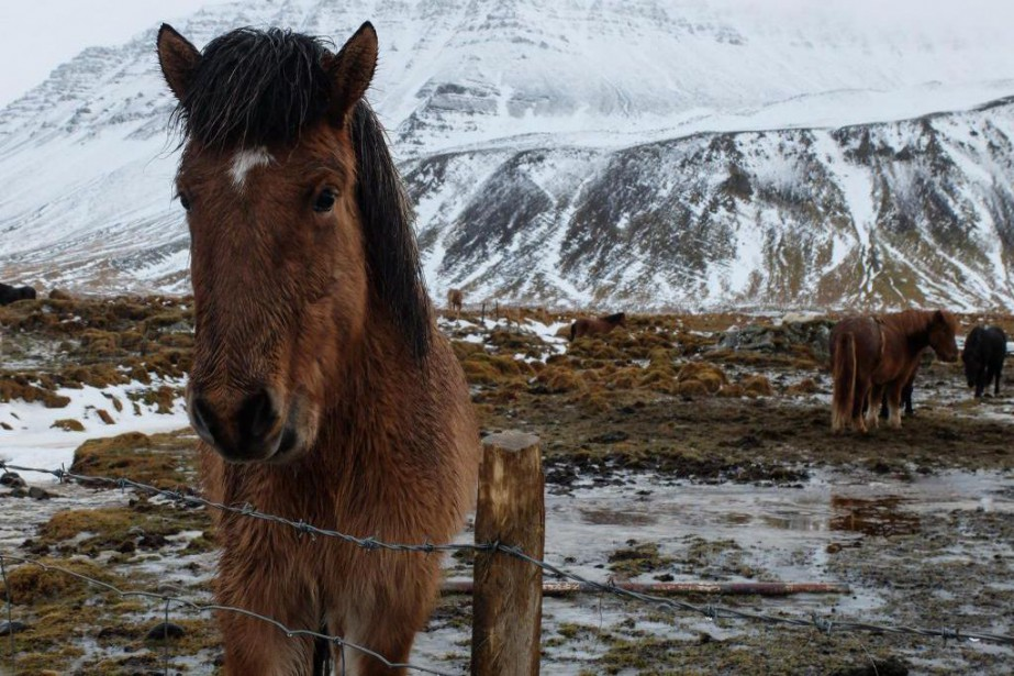 En voiture, on sort très rapidement de Reykjavik... (PHOTO AUDREY H. ARSENAULT, COLLABORATION SPÉCIALE)