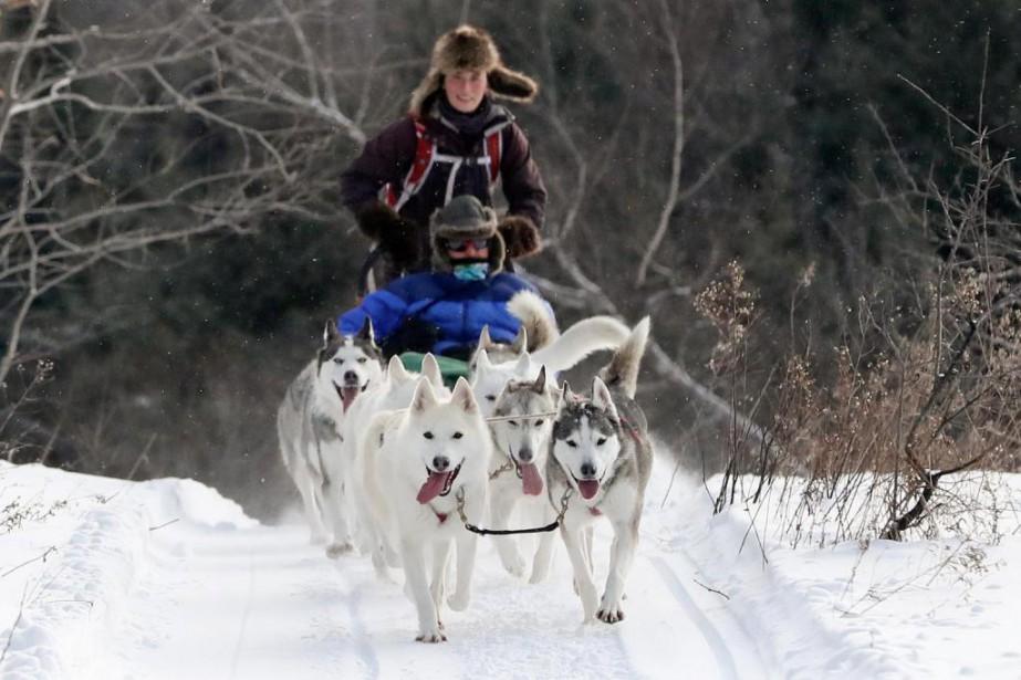 On doit choisir stratégiquement les chiens qui tireront... (Photo Robert Skinner, La Presse)