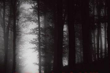 Red Light 3-Le sentier des bêtes... (photo fournie par VLB)