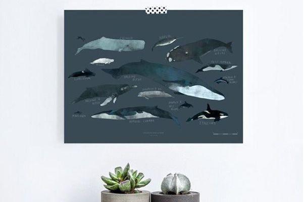 Vu sur instagram des baleines dans la maison sophie for Papeterie gatineau