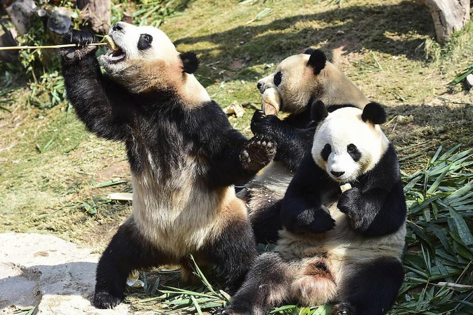 L'Union internationale pour la conservation de la nature... (Chinatopix via ARCHIVES AP)