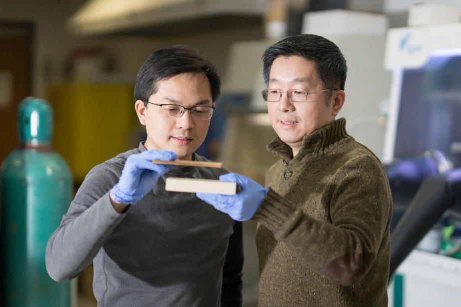 Les chercheurs Liangbing Hu et Teng Li, de l'Université du Maryland, comparent du bois condensé et du bois naturel. (Photo Laboratoire Bing, Université du Maryland)