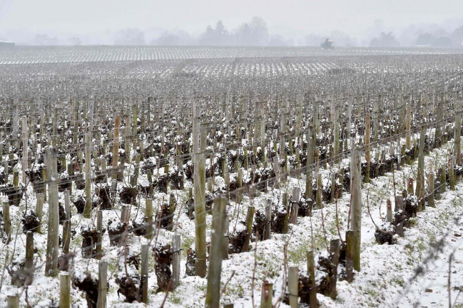 Bordeaux doit faire face aux conséquences d'un gel... (Photo archives AFP)