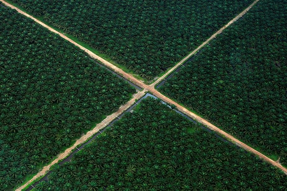 L'huile de palme est présente dans de nombreux... (Beawiharta, REUTERS)