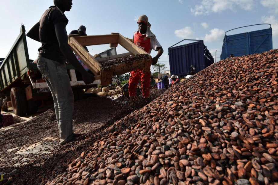 La culture du cacao constitue la principale contribution... (Photo Sia Kambou, archives Agence France-Presse)